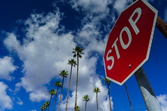 Stop for Clouds_DSC4127 (David Horne1249) Tags: clouds sony palmtrees stopsign wideanglelens neutraldensityfilter graduatedneutraldensityfilter sonyalpha leefilters sonyimages mirrorlesscamera sonymirrorless sonysel1018 e1018mmf4oss sonya6000 sonyilce6000 leeseven5filters