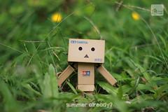 summer! (barrypangilinan) Tags: summer canon 50mm danbo danboard danbomini