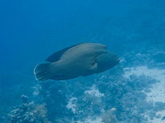 IMG_0435 (eye[4]eye) Tags: egypt diving gypten tauchen bluewaves