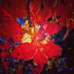 Foglie... Leaves... (Carletta20) Tags: portrait italy macro art nature beautiful foglie canon landscape photography nikon europa italia colore fotografie magic scenic natura nixon explore product colori bellezza ab800 d700 naturetreasures mygearandme exploredgrid