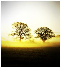 Yellow mist... (kevingrieve610) Tags: nature field landscape leaf dof foliage outoor 6d ef100mm