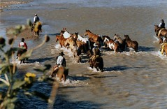 Remuda Crossing the River (fiddlersgreen) Tags: cowboys rivercrossing horseherd