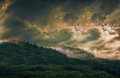 The forest in spring (* landscape photographer *) Tags: sunset italy verde primavera clouds flickr tramonto nuvole valle valley sa sasi 1020 paesaggio salvo foresta grazia lucania 2016 immagina senise nikond90 landscapephotographer sinni salvyitaly