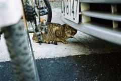 貓的一號表情 (YL.H) Tags: film cat canon taiwan taipei 台北 貓 straycats analogy 500n 流浪貓 streetcats 街貓 底片