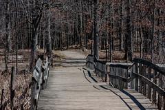 Metropark_Kensington-30862.jpg (CitizenOfSeoul) Tags: park wood bridge michigan wildlife holy kensington wald baum weg pfad metropark bruecke textur