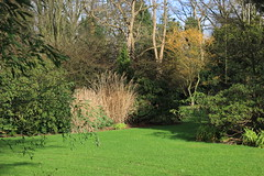Grass and Styphnolobium japonicum Golden Standard - Arboretum Kalmthout (stephenmid) Tags: belgium kalmthout