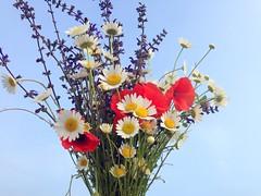 IMG_9114x (gzammarchi) Tags: italia natura campagna fiore paesaggio sanmarco ravenna pianura mazzo