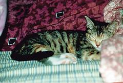 Little Yum Yum 1 (kevin63) Tags: sleeping people cats kitten photos calico yumyum lightner avalanche