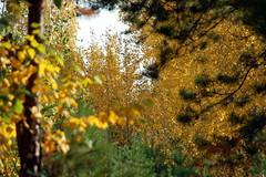 DSC_6020 (Rustam Bikbov) Tags: autumn september 2012    sverdlovskoblast