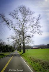 The long road_DSC5753 photoshop NIK edit  (nkatesphotography) Tags: trees nature landscape outdoors scenic farms buckscountypa nikon1855mm nikond700