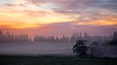 Sunrise on the Island.jpg (Eye of G Photography) Tags: trees usa field fog sunrise forrest places whidbeyisland northamerica washingtonstate sunsetsunrise skyclouds