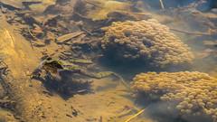 Guardian of the Mini-Frogs (Ulmi81) Tags: water see march wasser laub unter under olympus frog filter tele ft braun spawn bltter frosch zuiko mrz omd em1 70300 froschlaich 2016 polarizing pftze polfilter laich