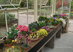 THE ALPINE HOUSE (David~Preston) Tags: uk flowers england cheshire pots alpinehouse nessbotanicgardens thewirral