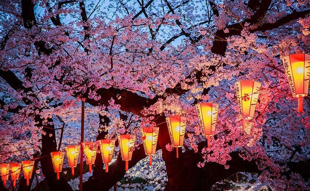 lễ hội Hanami Đà Nẵng 1