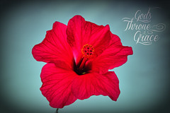 Hibiscus Grace (Free HI-RES) (Bible Verse Photo) Tags: life desktop new pink red wallpaper arizona flower macro typography photo spring high purple dynamic god tucson contemporary background text 4 jesus creative free commons az grace christian hires hibiscus stamen micro bible resolution pedals 16 christianity 5000 range scripture hdr throne mercy eternal savior verse gods 416 testament 2016 px hebrews 3x