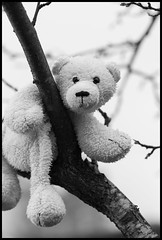 Lille Knut (fotografier/images) Tags: leica tree toy dof bokeh 100mm climbing summicron plumtree leicas littledoglaughedstories summicrons100mm lilleknut