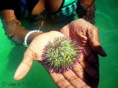 Mysterious Mermaid holding a purple urchin // Mystrieuse Sirne portant un oursin violet (Samy TV(youtube.com/user/LiLsam972)+225.000views) Tags: ocean woman mer animal hands er purple violet bleu urchin mains fille oursin sirene