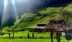 Schafe am Hang - im Stubaital Austria (barmicity) Tags: austria sterreich wiese gegenlicht schafe stubaital neustift milders