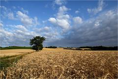 Sommer pur 15.02 (lady_sunshine_photos) Tags: austria europa sommer niedersterreich kornfeld weinviertel getreidefeld erntezeit