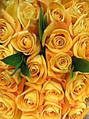 Roses By The Dozen (bigbrowneyez) Tags: flowers roses love nature yellow golden petals amazing pretty bright gorgeous awesome blossoms natura fresh special gifts stunning colourful lovely fiori fabulous joyful striking belli delightful uplifting gialli bellissimi rosesbythedozen