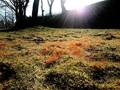 moss (akashirokiiro) Tags: japan moss aomori hachinohe imo  xperia