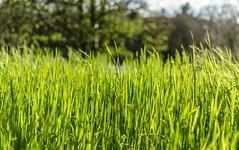 Les beaux jours arrivent : ) (Corentin Louis) Tags: sun france green nature 35mm nikon nikkor paysage printemps verdure mayenne herbes nikon35mm paysdelaloire nikkor35 nikkor35mm nikonphotography nikonphotographers nikonfrance nikonowners nikon35 nikond5100 nikonfr nikontop