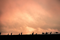 """""""saying goodbye to another day"""" (lucidddreamin') Tags: sunset silhouette clouds rural australia victoria kangaroo roo goldenhour"""