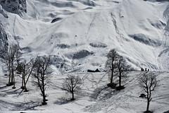 Sonamarg (gurpreet_singh.) Tags: trees india snow glacier kashmir jk jammu sonamarg thajiwas
