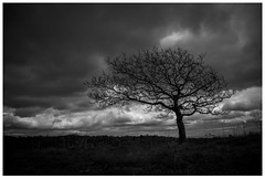 Lonely tree on Caerphilly mountain. (mortimerphotographic) Tags: uk white black tree wales canon landscape south explore lonely caerphilly 5dmk2