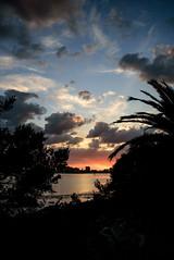 Florida Sunset (Emily Kistler) Tags: ocean bridge trees sunset sky beach gulfofmexico water silhouette skyline clouds palms outdoors evening nikon gulf florida d750 clearwaterbeach clearwater