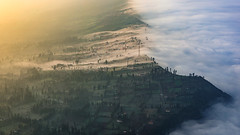 Morning mist in Ngadisari (Thanut S.) Tags: city morning mist indonesia landscape bromo ngadisari