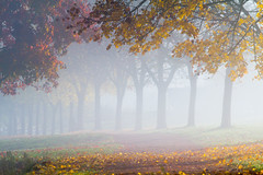 JML-2015-IMG_7763 (photo.jml) Tags: autumn color tree fog automne atmosphere arbre brouillard couleur ambiance