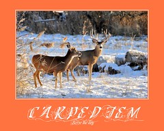 Carpe Diem - Seize the Day (Great Salt Lake Images) Tags: winter poster utah antelopeisland greatsaltlake motivation muledeer carpediem seizetheday fieldinggarrranch bighugelabs