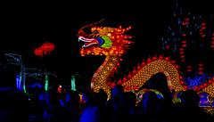 Longleat Lanterns (jksphoto1) Tags: flowers plants fish lights nikon panda colours dragon chinese statues lions lantern fullframe longleat ff afterdark d610 nikond610