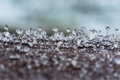 Where Diamonds Grow (Jan Moons) Tags: cold detail macro ice nature frozen amazing nikon frost crystal diamond micro reverse reverselens nikond600