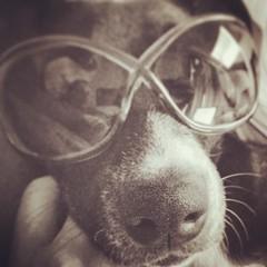 dog reflection monochrome sunglasses puppy kentucky ky louisville instagram appleiphone5