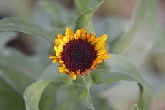Leuchtend (hwl.weber) Tags: outdoor pflanze blume nikond3200 blhen naherholung blcherpark