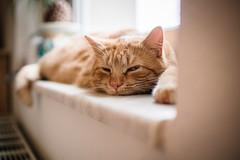 Thank god its monday! (Margot in Love) Tags: cat deutschland sachsen katze monday funnycat montag tgim stollbergerzgeb thankgoditsmonday