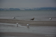 Möven (Frank Guschmann) Tags: winter vacation holiday beach strand nikon urlaub balticsea rügen ostsee binz rugia d7100 frankguschmann nikond7100