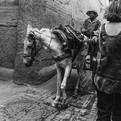 Derb Lalla Azouna (THOMAS-MOORE) Tags: blackandwhite morocco equestrian socialdocumentary