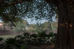 under the trees (_NicoDem_) Tags: india canon mark delhi ii 5d complex qutub minar 2015 5dmarkii 5dmkii
