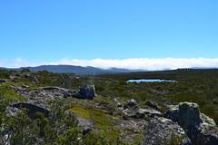 Outcrop above Thompsons Rivulet Central Plateau (dracophylla) Tags: tasmania centralplateau thompsonsrivulet