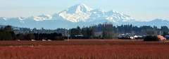 View of Mount Baker from Pitt Poulder (SonjaPetersonPh♡tography) Tags: dykes canada landscape nikon britishcolumbia wetlands marsh mountbaker pittmeadows alouetteriver pittpoulder pittriverdykes nikond5200 southarmalouetteriver nikonafs18140mmf3556edvr