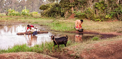 Doing choirs at the lake, Kenya (ReinierVanOorsouw) Tags: africa travel people lake kenya goat afrika washing kenia geit mensen choirs kakamega kenyai eastafrica  washingcloths reisfotografie gettingwater  reiniervanoorsouw oostafrika