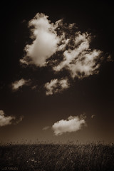 Clouds over Field (luz.marsen) Tags: flowers summer sky plants cloud brown white abstract black nature field clouds dark landscape meadow deep dry heat dried