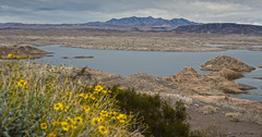 Winter Color (magnetic_red) Tags: flowers winter lake storm mountains water yellow clouds desert nevada scenic stormy lakemead vista americanwest