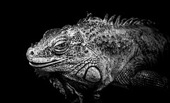 Smile (Acero666) Tags: blackandwhite bw art zoo reptile darkart 2015 a7r sonya7r ilce7r sel90m28g houseofmonochromaticexploration zooamazona