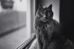 * (clo dallas) Tags: portrait blackandwhite bw pets window cat 35mm canon feline fenster teo indoor portrt katze ritratto tier feflino