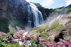 Wasserfall (welenna) Tags: flowers summer mountains switzerland waterfall wasserfall berge alpen blume berneroberland engstligenalp