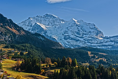 The  majestic Jungfrau and her forests crown .  A view from Wengen. Switzerland.Happy Valentine's day.No. 1350. (Izakigur) Tags: trees alps ice topf25 alpes liberty schweiz europa suiza swiss mother topf300 unesco glacier bern alpen svizzera alpi berne wengen forests valentinesday ch thelittleprince jungfrau berna berneroberland sussa suizo lasuisse kantonbern izakigur thejungfrauregion cantonofbern suisia laventuresuisse
